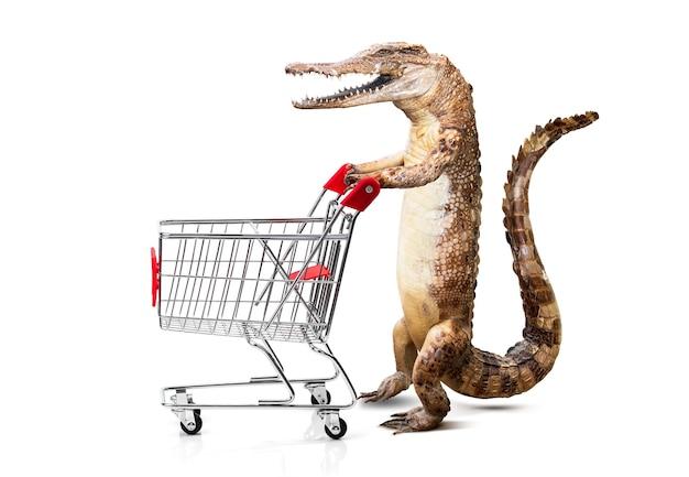 Krokodil schiebt den einkaufswagen isoliert auf weißem hintergrund vor