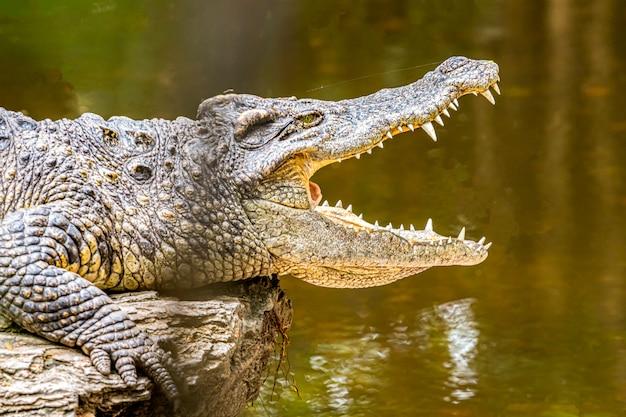 Krokodile sind tiere mit schönen zähnen