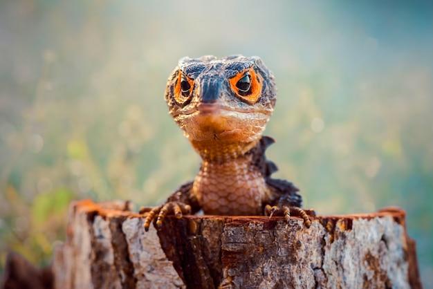 Krokodilskink auf holz im tropischen wald