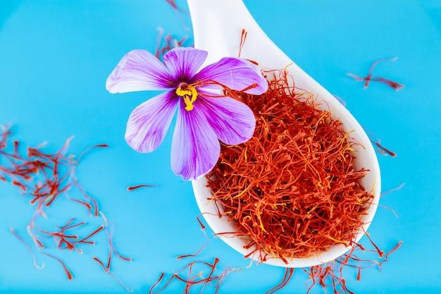 Krokusblume und getrocknete gewürzsafran staubblätter auf blauem hintergrund. die verwendung des safrangewürzs in der küche, kosmetologie, medizin.