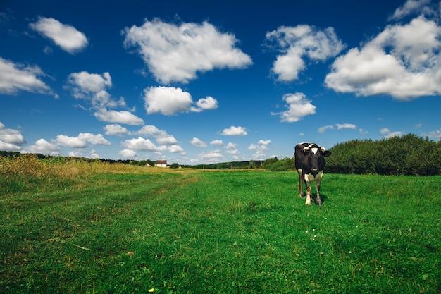Kühe auf einem grünen feld und einem blauen himmel.