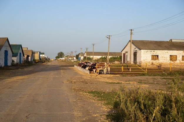 Kühe in einem stift auf einer farm