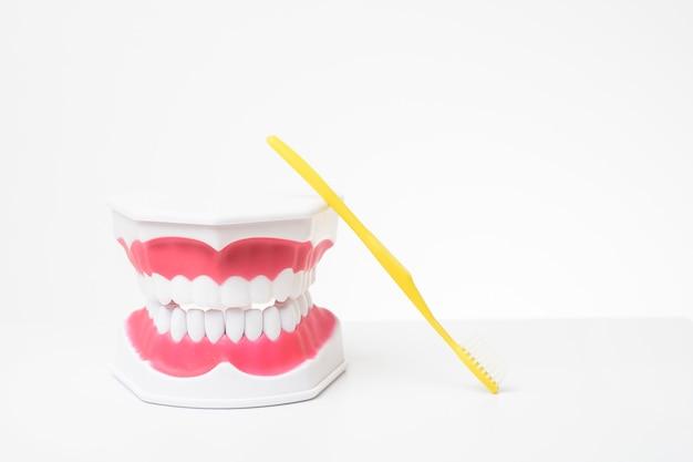 Künstliche modellzähne auf weißem hintergrund der zahnpflegedemonstration