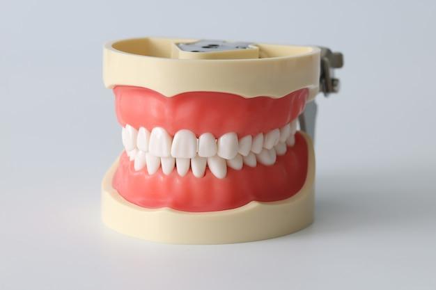 Künstlicher kiefer mit schönem mundhygienekonzept mit weißen zähnen