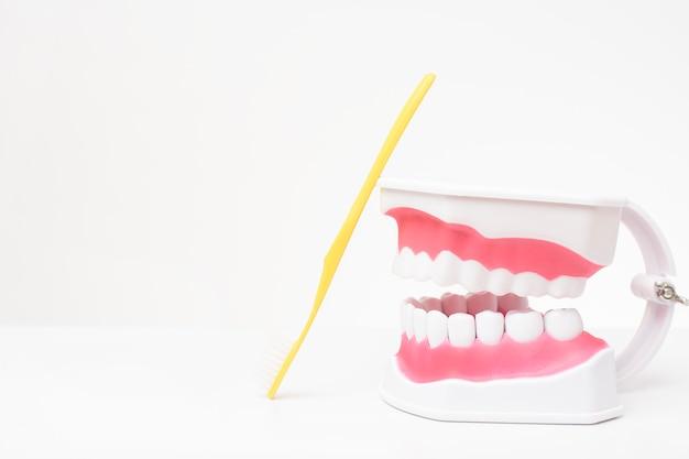 Künstliches zahnmodell auf weißem tisch