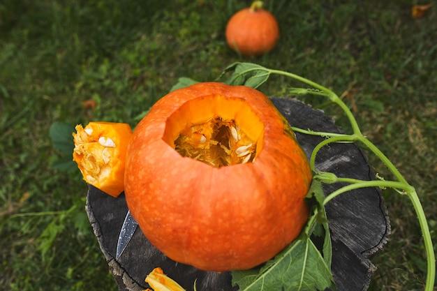 Kürbis auf baumstumpf im wald, garten, im freien, in der nähe von messer, bevor für halloween geschnitzt, bereitet jack o'lantern. dekoration für party