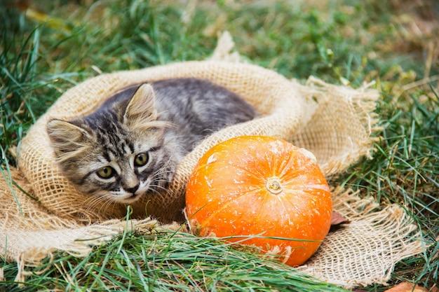 Kürbis und neugieriges kätzchen