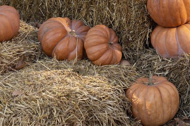Kürbisse liegen im heu, herbstinstallation vor halloween.