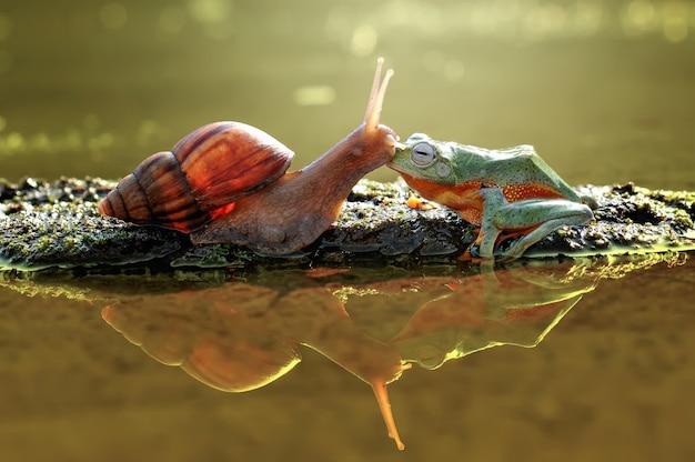 Küssen frosch und schnecke