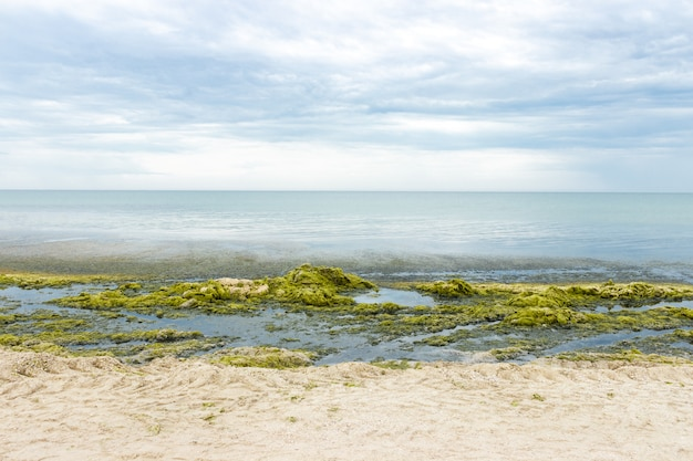 Küste voller meeresgrünalgen. ökologie und naturkatastrophen-konzept