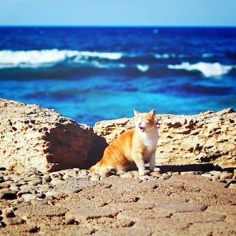 Küstenlinie mit brüllenkatze der ingwergetigerten katze