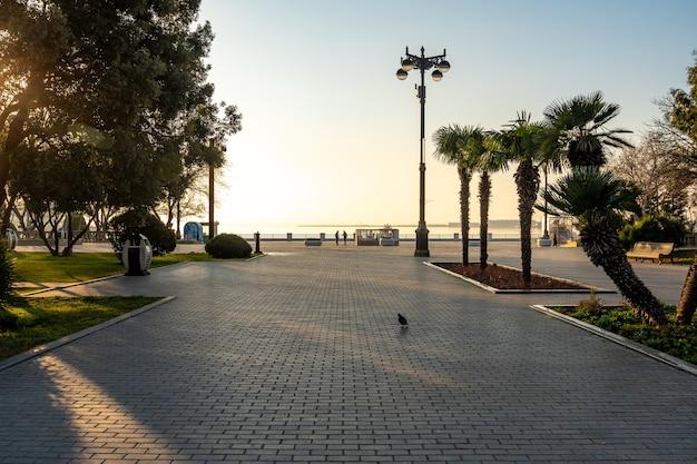 Küstenpark der stadt baku aserbaidschan mit dekorativen bäumen
