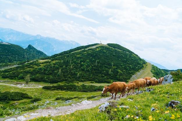 Kuh, die auf straße durch alpen steht.