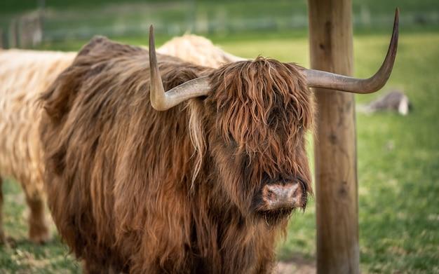 Kuh mit natürlicher ansicht