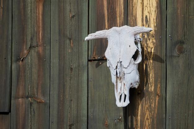 Kuhkopfknochen, der an der alten hölzernen struktur hängt