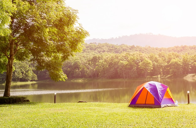 Kuppelzelte, die im waldcampingplatz kampieren