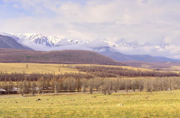 Kurai-steppe im altai-gebirge bäume am ufer des chuya-flusses