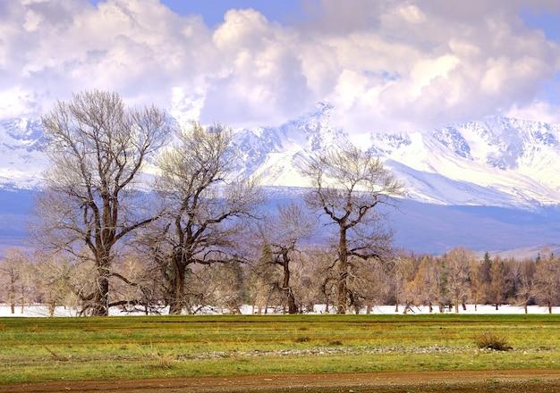 Kurai-steppe im frühjahr kahle bäume inmitten von schneeverwehungen und trockenem gras