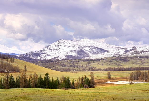 Kurai-steppe im frühjahr trockenes gras auf den hängen schneebedeckte gipfel der berge