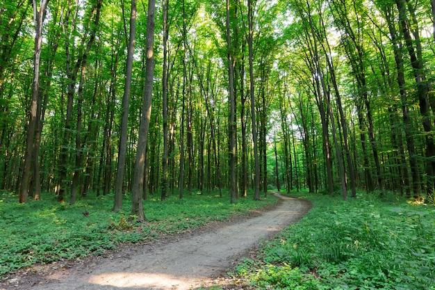 Kurvenfußweg durch grünen wald