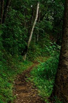 Kurvenweg im regenwaldlandschaftshintergrund