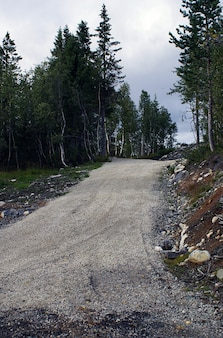 Kurvige straße, umgeben von schönen grünen bäumen in norwegen