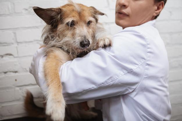 Kurzer schuss eines männlichen tierarztes, der reizenden flauschigen mischlingswelpen in seiner klinik umarmt