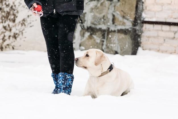 Labrador-hund, der im schnee liegt