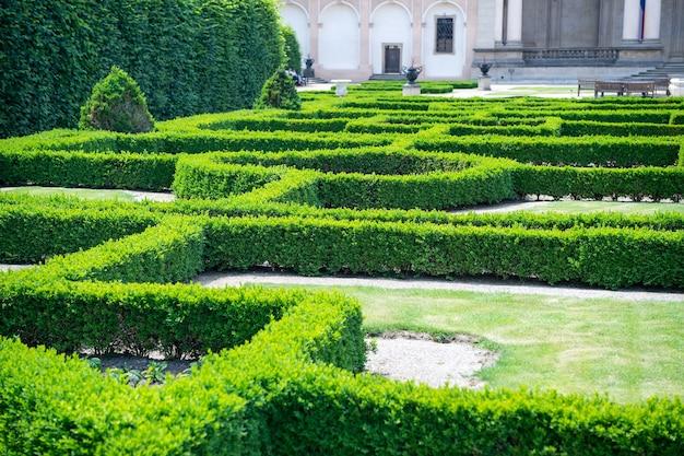 Labyrinth von grünpflanzen im garten von prag, tschechien, an sonnigen sommertagen auf naturlandschaft. landschaftsbau, gartenkonzept. urlaub, reisen, fernweh