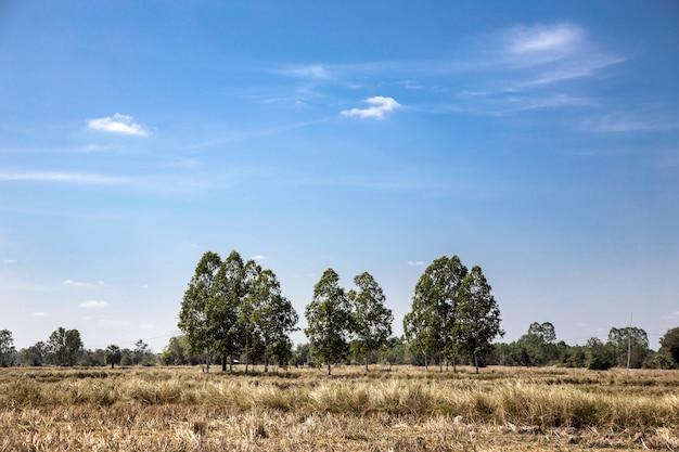 Ladscape friedlich von landwirtschaftsfeld im sommer
