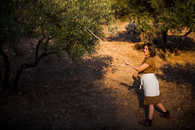 Lächelnde frau, die olive auf dem gebiet erntet