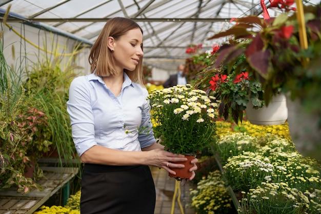 Lächelnde glückliche floristin in ihrem kinderzimmer, die topfchrysanthemen in ihren händen hält, während sie sich um die gartenpflanzen im gewächshaus kümmert