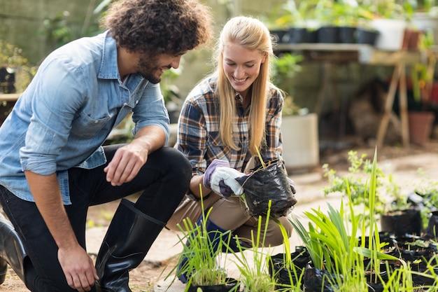 Lächelnde mitarbeiter, die pflanzen inspizieren