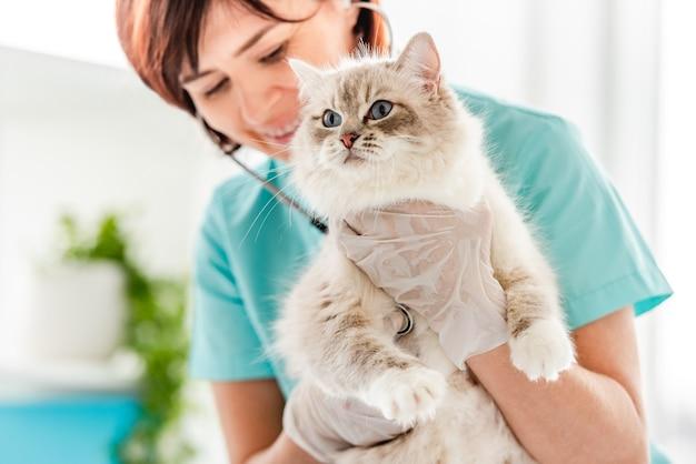 Lächelnde tierärztin, die flauschige ragdoll-katze während der medizinischen untersuchung in der tierklinik hält und auf ihr herz hört. nahaufnahmeporträt eines entzückenden reinrassigen katzenartigen haustieres im tierkrankenhaus