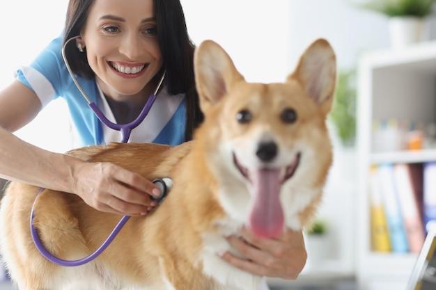 Lächelnder tierarzt, der hund in der klinik auskultiert. diagnose und behandlung von lungen- und herzerkrankungen beim hundekonzept