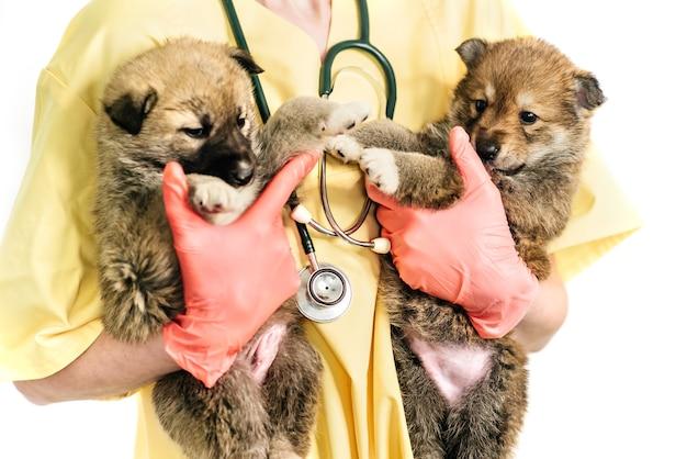 Lächelnder tierarzt und welpe in der klinik isoliert auf weißem hintergrund