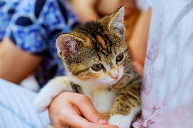 Lächelndes kleines mädchen mit kätzchen in ihren armen