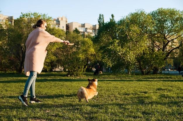 Lächelndes mädchen, das mit ihrem walisischen corgi pembroke welpen spielt, lächelt und glücklich. netter hund, der mit einem stock im park spielt.