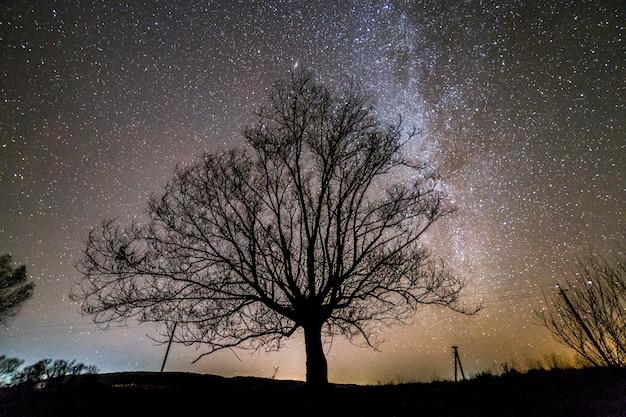 Ländliche landschaft bei nacht. dunkle bäume unter schwarzem sternenhimmel mit milchstraßenkonstellation.