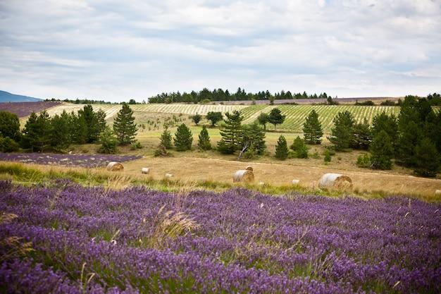 Ländliche landschaft mit lavendelfeld und strohballen in der provence, frankreich. aufnahme mit selektivem fokus