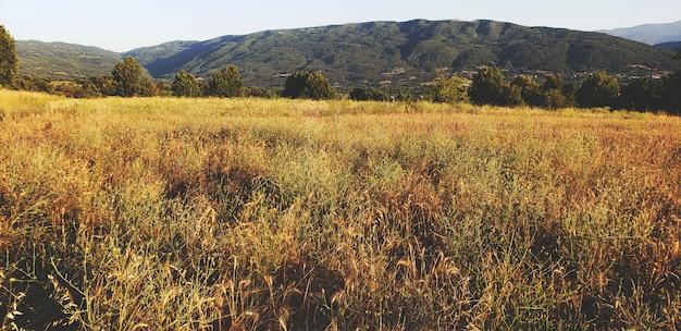 Ländliche landschaft mit weizenfeld