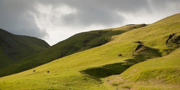 Ländliche landschaft, rolling hills, pferde grasen auf weideland