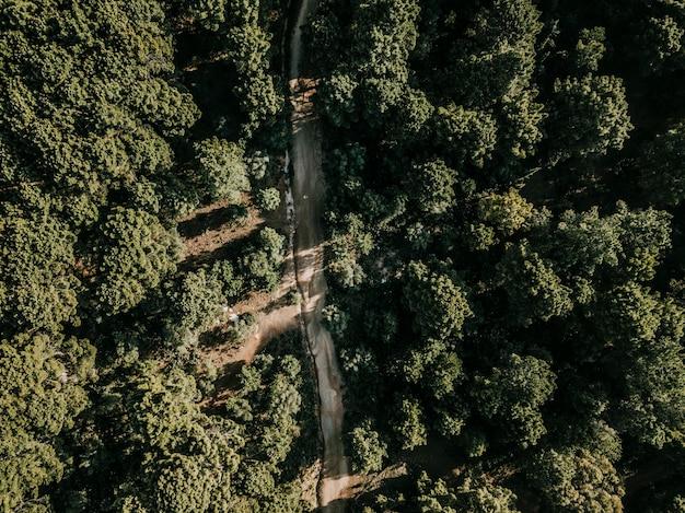 Ländliche runde umgeben von grünen tropischen bäumen