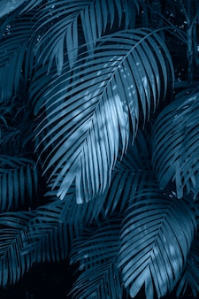 Lässt bunte blume der abstrakten tropischen blätter der palme auf dunkler tropischer laubnatur