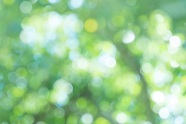Lässt grünen unscharfen hintergrund