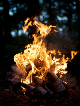 Lagerfeuer aus brennholz Premium Fotos