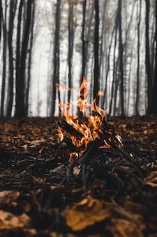 Lagerfeuer im wald am abend