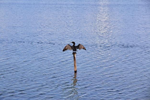 Lagune rodrigo de freitas in rio de janeiro, brasilien