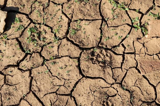 Land mit trockenem und rissigem boden, wobei junge pflanzen herauswachsen. hintergrundtextur. ansicht von oben