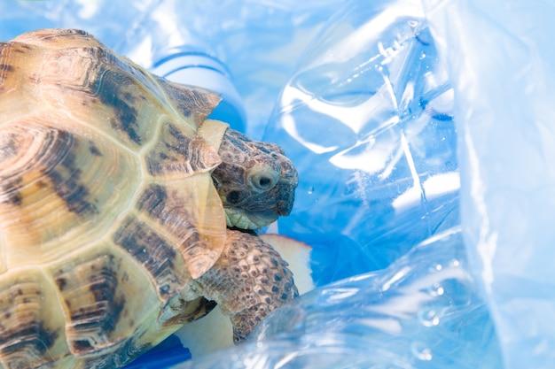 Land zentralasiatische schildkröte in einem haufen plastikmüll